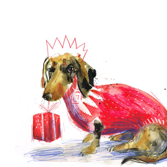 Frankie mini dapple dachshund