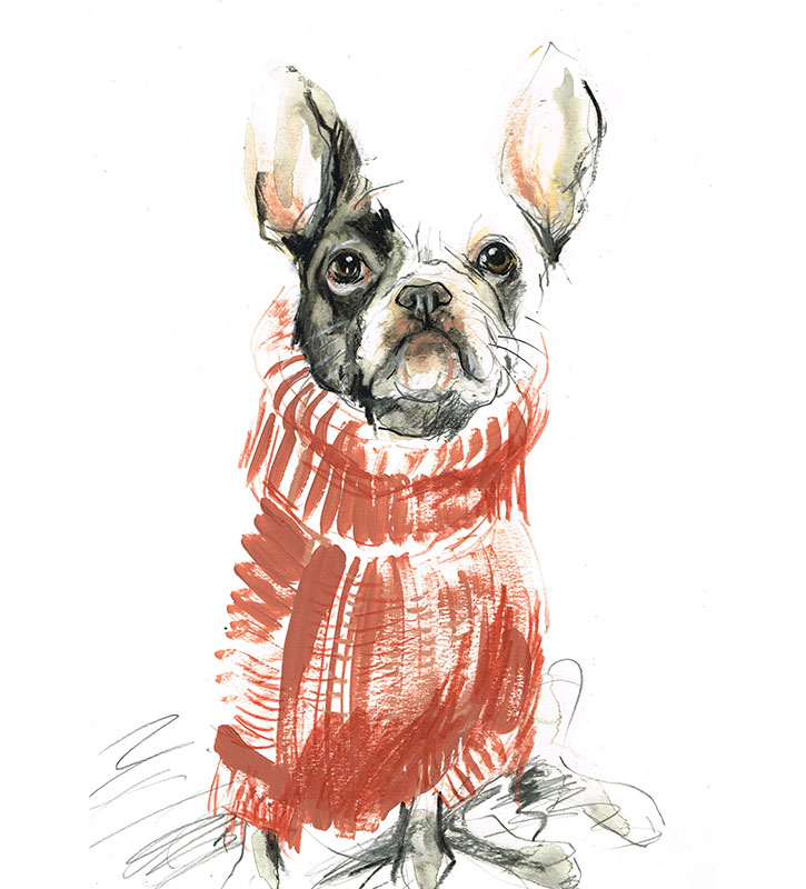 french bulldog in sweater