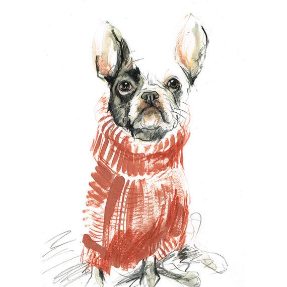 french bulldog in sweater
