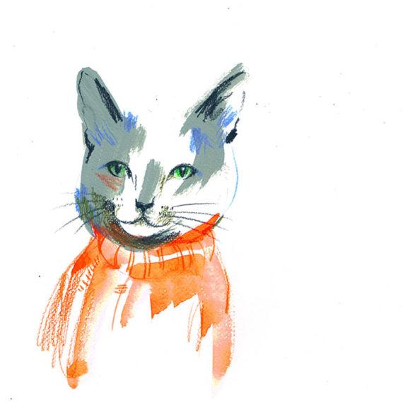 Cat in jumper