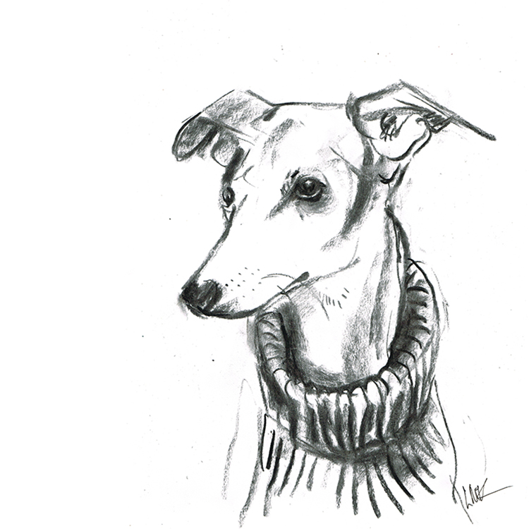 Whippet in rollneck