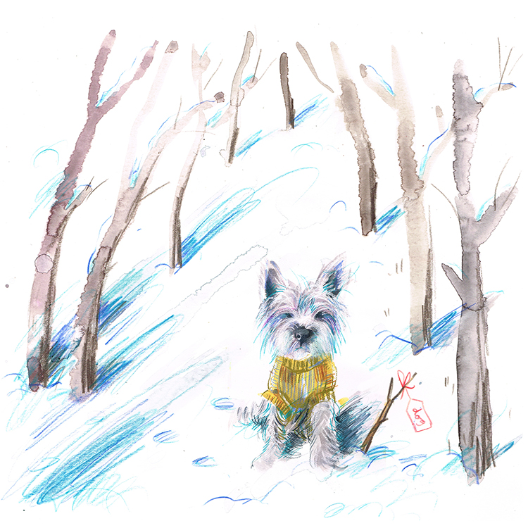 Westie in winter woodlands