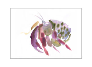 hermit crab illustration laura mckendry