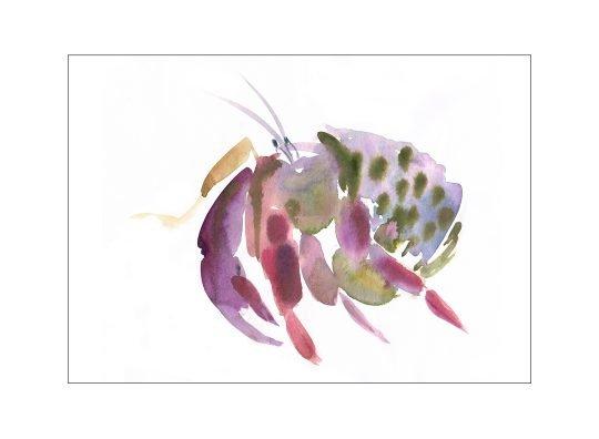 hermit crab illustration laura mckendry